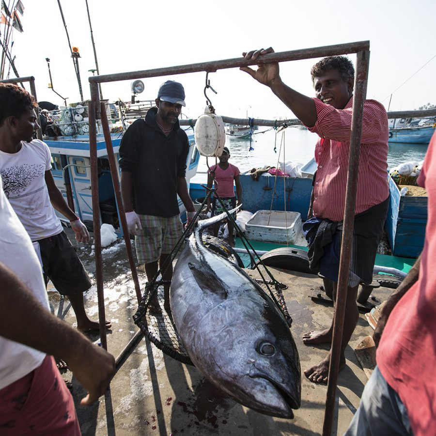 Fishing for prosperity | UNOPS